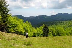 leveles május / May (debreczeniemoke) Tags: landscape spring may hike tavasz gutin május túra feketehegy látkép mogoşa gutinhegység munţiigutâi munţiigutin olympusem5 gutinmountains