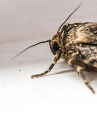 Moth (Stuart.67) Tags: moth eye macro nikon d800 naturethroughthelens
