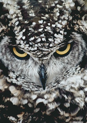 YEAH! Well I Hate You Too (Neil B's) Tags: hate you 2 too owl sympatico look bird beautiful