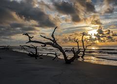 boneyard sunrise (fins'n'feathers) Tags: georgia wassawisland sunrise boneyard beach clouds sand trees deadtrees