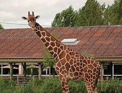 Zoo de Cerza (CyndiieDel) Tags: zoodecerza zoo cerca normandie clavados france animaux nature girafe