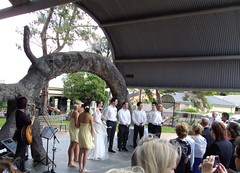 Adelaide. Glenelg. Wedding under the Old Gum Tree where South Australia was proclaimed as a British colony on 28 December 1836. (denisbin) Tags: holdfastbay glenelg adelaide wedding theoldgumtree proclamation riverredgum eucalyptus gumtree canopy eucalyptuscamaldulensis