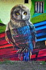 colorful owl (codedtestament777) Tags: citysights5 graffiti art beautiful love life design surreal text bright sign painting writing nature crazy weird fabulous environment cartoon animation outdoor street photo border photoborder illustration collection portrait face expression character