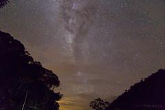 Clear Night in the Amazon Jungle, Ecuador