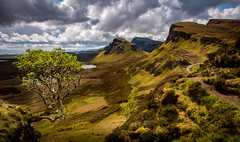 The Totternish Ridge, and 'That Tree' (cliveg004) Tags: totternish skye isleofskye quiraing biodabuidhe beinnedra staffin scotland highlandsislands sun dappled spotlight clouds sky mountains thattree challengegamewinner winnerschallenge