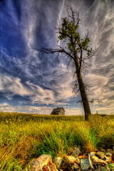 the tree and the house (journey ej) Tags: