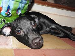 Un amigo peludo (jesusdante) Tags: perro mascota peludo compaia mejor amigo foto