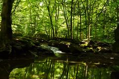 Tranquility (brutus61534) Tags: streams trees nikon d7100