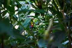 DSC_5373 (sergeysemendyaev) Tags: 2016 rio riodejaneiro brazil jardimbotanico botanicgarden     outdoor nature plants    butterfly  green  beauty