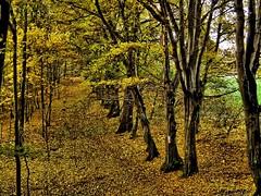 Herbstspaziergang (flieger1964) Tags: vogtland germany deutschland europa wald forest autumn bume farben natur