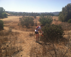 016 Beating The Bush (saschmitz_earthlink_net) Tags: 2016 california encino lakebalboa orienteering laoc losangelesorienteeringclub losangeles losangelescounty lakebalboaanthonycbeilensonpark