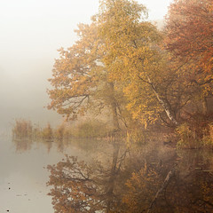 The Pond (hammermad) Tags: forest fog foggy fun trees tree water woods walking white autumn atmopheric essex essexlandscapes exposure eppingforest epping england morning mist orange calm reflection red