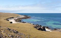 The Sea from High _4890 (hkoons) Tags: latrabjargcliffs westfiords westfjords atlantic iceland latrabjarg bay beach fiord fjord inlet island north ocean peninsula saltwater sand sea surf water waves