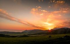 Kyrgyzstan-5759 (EbE_inspiration) Tags: kyrgyzstan nikon nikond7100 nature serene green hill horse hills landscape mountain