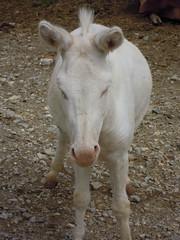 DSCN8470 (Clerss Malisha) Tags: fattoria farm daino capriolo deer animali animale animals animal ungulati oche gatto cat dog cane mucche cows cow mucca oca capre sheep pecora cute tenero adorable wonderful sympathic