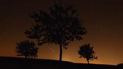 Three Trees (Erich Hochstger) Tags: nacht night nachtaufnahme nightshot langzeitbelichtung longexposure baum bume tree trees sterne stars