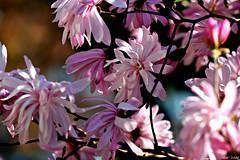 Spring feeling (albenaw) Tags: rememberthatmomentlevel1 rememberthatmomentlevel2 rememberthatmomentlevel3 vigilantphotographersunite vpu2 vpu3 vpu4 vpu5