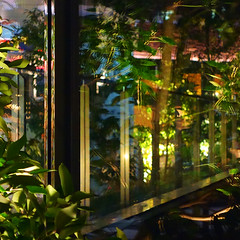 =Reflections-104Night garden in the other side of the glass (kouichi_zen) Tags: city light reflection glass leaves architecture night garden layer material