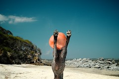 Hallelujah, A Vacation! (MilkaWay) Tags: ocean dog beach coast jump sand play exercise bluesky birddog tessa frisbee paws jekyllisland atlanticocean gsp germanshorthairedpointer 4yearsold coastalgeorgia glynncounty