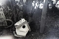 1304_ID11_02_018 (funkenwerk.) Tags: blackandwhite film lens fuji flare analogue af nikkor neopan400 expired ilford nikonf3hp stills id11 aspergillus 3570