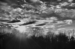 Let the light shine through. (Dan:Brown) Tags: sunset bw virginia nikon nik lr4 d7000 silverefexpro2 18200mmf3556gafs