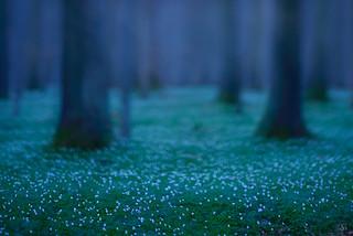 bright little stars ...