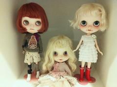Dolly shelf today