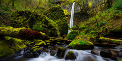 Green Seasons (Chad Dutson) Tags: statepark panorama fern green yellow oregon composition creek river landscape waterfall moss nikon stream northwest perspective waterfalls vegetation lime columbiarivergorge d800 waterscape elowah nationalscenicarea elowahfalls mccordcreekfalls johnbyeon piercefalls