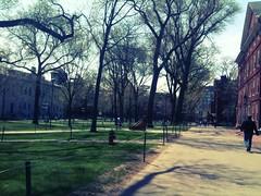 Harvard, muy bueno!!