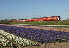 Koningstrein VIRM 9520 at Hillegom, April 29, 2013 (cklx) Tags: blue orange holland spring hyacinths virm hillegom 2013 9520 9524 koningstrein olympicvirm