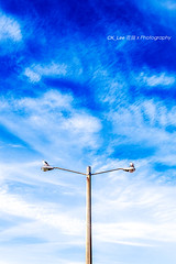 If I was a streetlamp with birds (BraqueLee) Tags: street abstract lamps concept