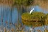 My sweet sofà (Jokermanssx) Tags: sardegna pond egret arborea oristano stagno garzetta sardinya senaarrubia riccardodeiana