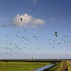 Thousands of geese flying around the Horse of Marken (B℮n) Tags: sea summer dykes lighthouse holland green heritage history water netherlands dutch grass birds landscape island boat geese site topf50 day cows flat cloudy tourist goose canals unesco national level pastures below summertime recreation former dijk peninsula topf100 dike marken tabouret authentic barnaclegoose ijsselmeer weiland waterland koe koeien noord nominated vformation polders vpower brandgans 100faves 50faves brandganzen rijksmonument gouwzee paardvanmarken oosterpad vuurwachter