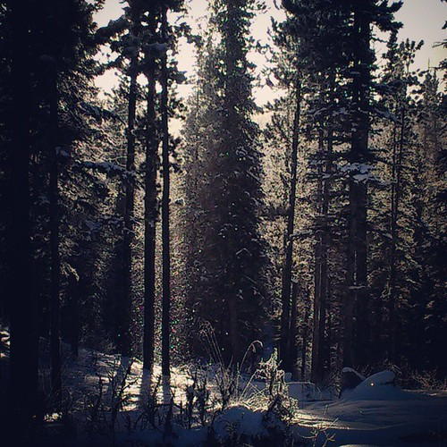 Boreal forest bejeweled by sun-kissed snowflakes #yxy #Yukon
