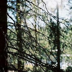 Nuuksion Kansallispuisto (soreikea) Tags: 2015 zenzabronica s2 film analog kodak portra160 helsinki finland travel journey nuuksionkansallispuisto