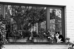 Guarding the plants [explored] (devos.ch312) Tags: flowers trees plants cat windowreflections