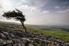 Twistleton tree (Alison T30) Tags: twistleton lonetree limestonepavement limestone yorkshiredales yorkshire
