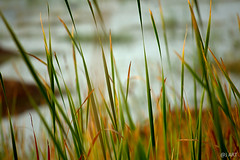 colour full (harpreetsingh23) Tags: riverside greengrass