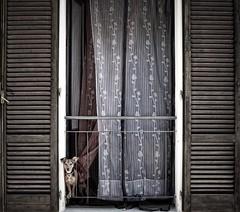 Dog (sladkij11) Tags: cane dog pet finestra nikond610 afnikkor35mmf2 bw biancoenero blackandwhite