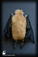 Bat Soft culpture, Handmade OOAK toy, stuffed bat, Art Doll, Animal sculpture (Professional Art Doll Maker) Tags: bat battoys stuffedbat batsculpture handmadebat ooak sculpture anthrogon worldofdollsanthrogon animalssculpture softsculpture halloweengifts halloween arttoy batarttoy halloweenbat zlatasfantasydolls zlatasfantasyforest