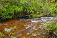 Surprise River (robertdownie) Tags: trees water river green australia flowing wild rainforest rapids wilderness remote conservation tasmania franklin gordon organge ferns suprise tannin rivers national park bob brown western tasmanian world heritage area