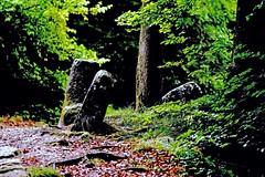 la verdure (jbi78) Tags: pierres feuillage nikond5200 nikkor 180mm