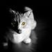 Bird-watcher.+The+Dark+Side+of+the+Cat.+%3A+%29