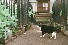 4552016/6/20 (Natsuki_y) Tags: film filmphotography cats cat straycat canon eos1n 85mm iso1600 tokyo