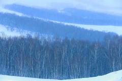 DP1U2099 (c0466art) Tags: 2015 chinese inner mogonlia grassland winter season trip travel early morning sunrise momemt cloudy blue tone mountain white snow world cold weather beautiful landscape scenery trees light canon 1dx c0466art