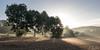2016-08-29_DSC_3592_web (joerg.z) Tags: feld fotografie gegenlichtaufnahme genre himmel holzhausen homberg jahreszeiten landschaft landschaftsbild landschaftsfoto landschaftsfotografie morgensonne naturlandschaft naturfotografie nebel silhouette sommer sonne sonnenaufgang umwelt wetter witterung