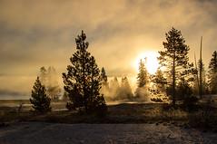 West Thumb Sunrise 2 (ebhenders) Tags: yellowstone national park west thumb geyser basin sunrise steam lodgepole pine lake silhouette wyoming