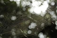 WEB (KazKuro) Tags: web spider net insects bokeh nikon1 v1 nikon nikkor 70300mm ft1