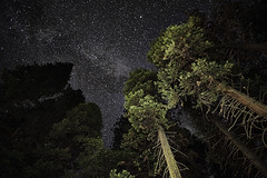 _DSC7737 (brianbostwick1) Tags: yosemite star starpicture starlight stars starrysky starsky sony sonya7r sony16mm trees nature naturelovers
