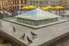 birdbath (stevefge) Tags: krakow poland oldtown squares fountains birds pidgeons umbrellas summer zomer reflectyourworld